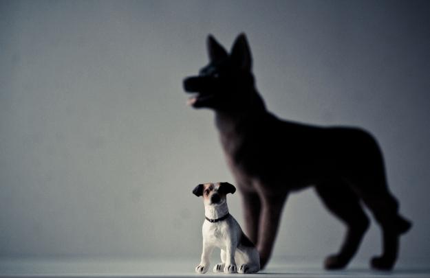 Perro-Lobo